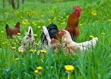 ferme de animale austria
